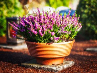 Zunanje rastline