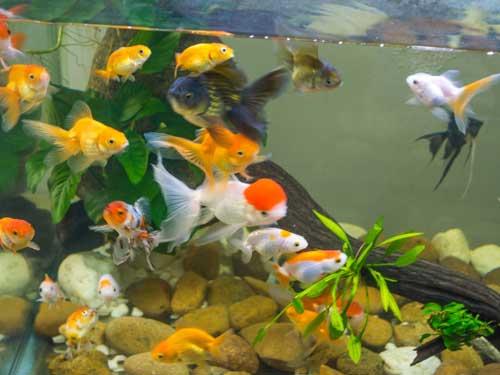 Akvarijska oprema