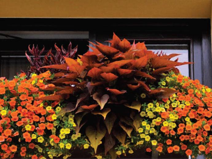 Rastline, semena, zemlja in gnojila