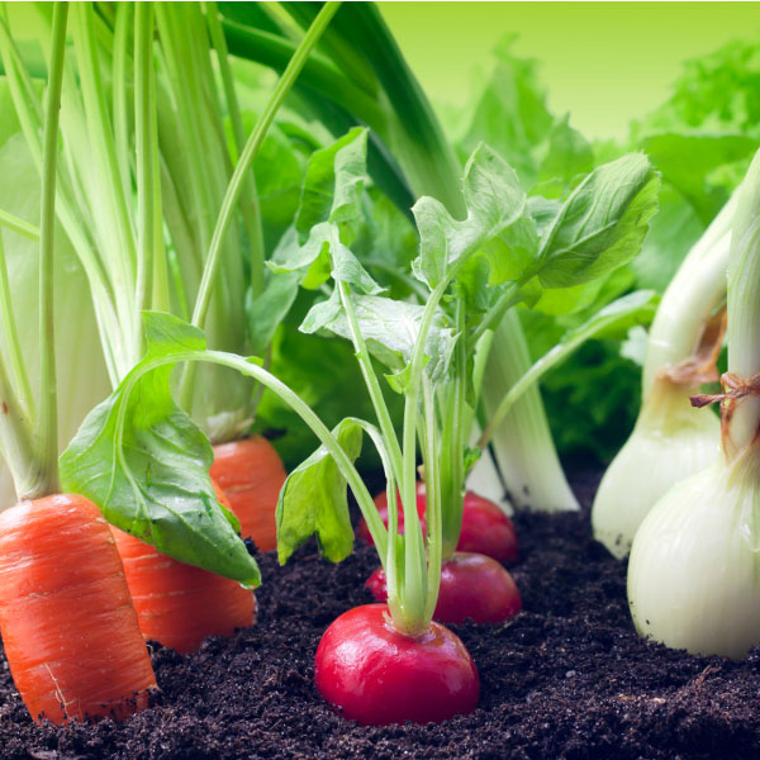 zelenjava na vrtu