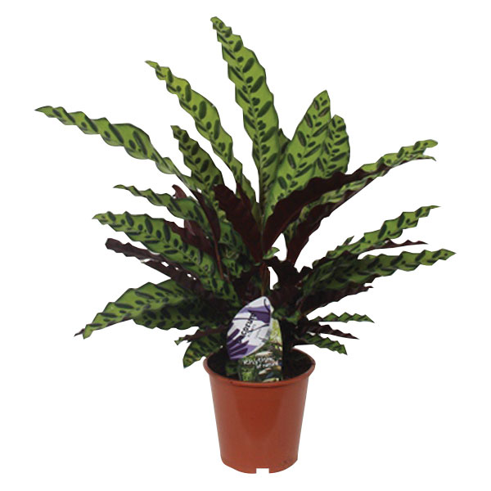 slika-rastlina-1